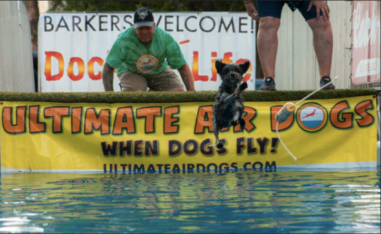 a dog jumping through the air into the water