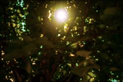The sun through leaves.