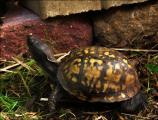 A turtle looks at bricks