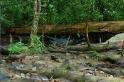 A river runs under a fallen tree