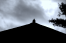 A bird on the top of a roof
