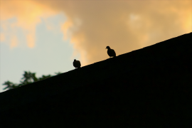 two birds on a roof