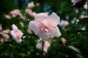 A wet flower