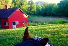 A dog lies down on a farm
