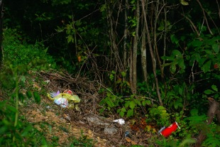 litter and forest