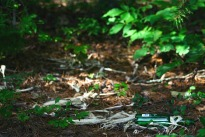 a bottle in the forest